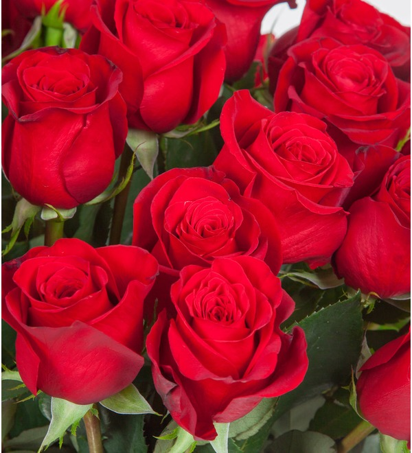 Bouquet of Ecuadorian Freedom Roses (25, 51, 75 or 101) – photo #3