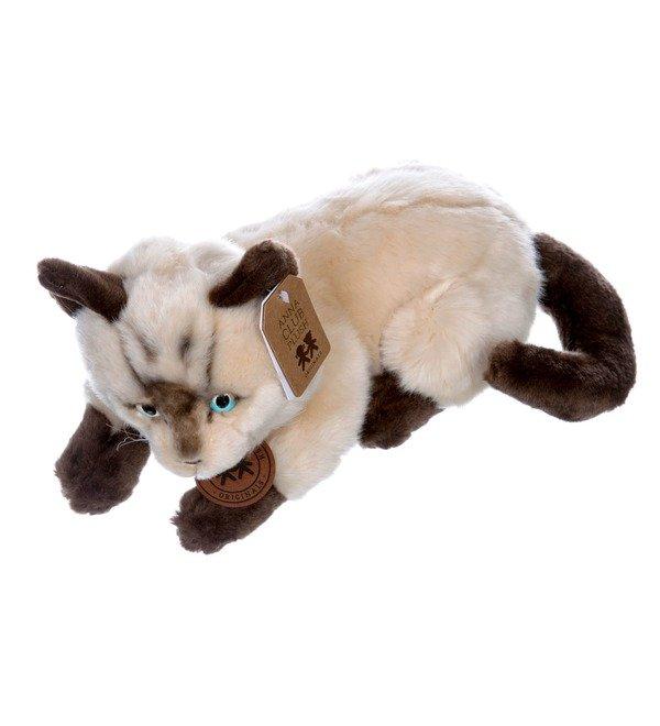 Мягкая игрушка Сиамский кот (25см) – фото № 2