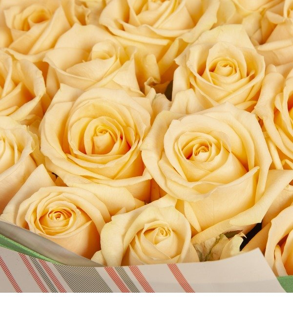 Bouquet-solo Cream roses (25.51.75 or 101) – photo #2