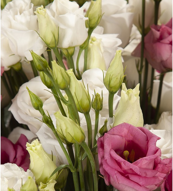 Bouquet-duet Eustoma (15,25,51 or 101) – photo #3