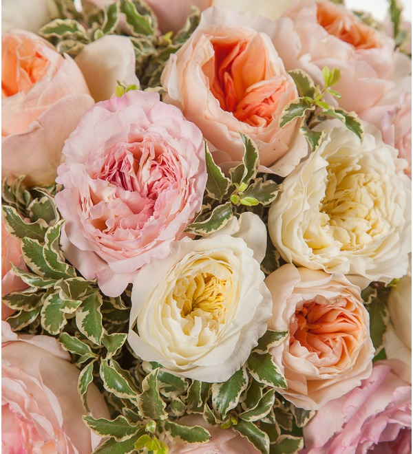 Bouquet-trio David Austin (15,25,51 or 75) – photo #2