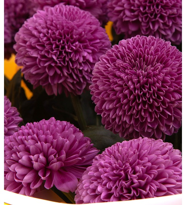 Bouquet-solo of chrysanthemums Gustav (7,15,21,35 or 51) – photo #3