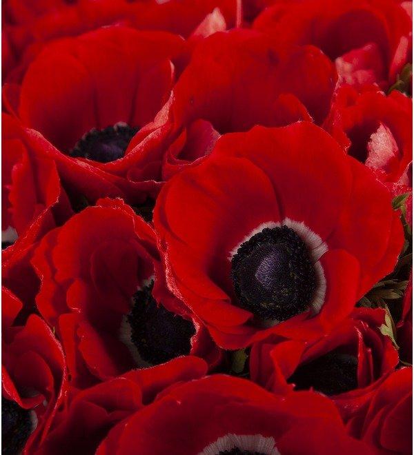 Букет-соло Красные анемоны (15,25,51 или 75) – фото № 2