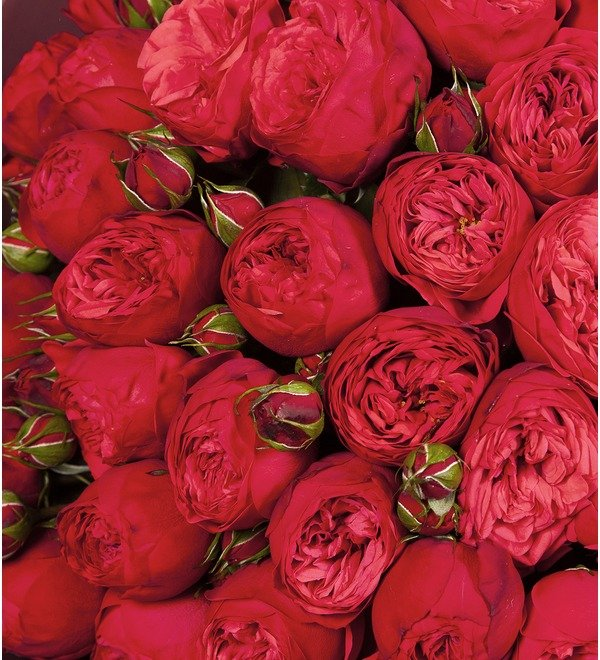Bouquet-solo Red Piano (15,25,51 or 75) – photo #2