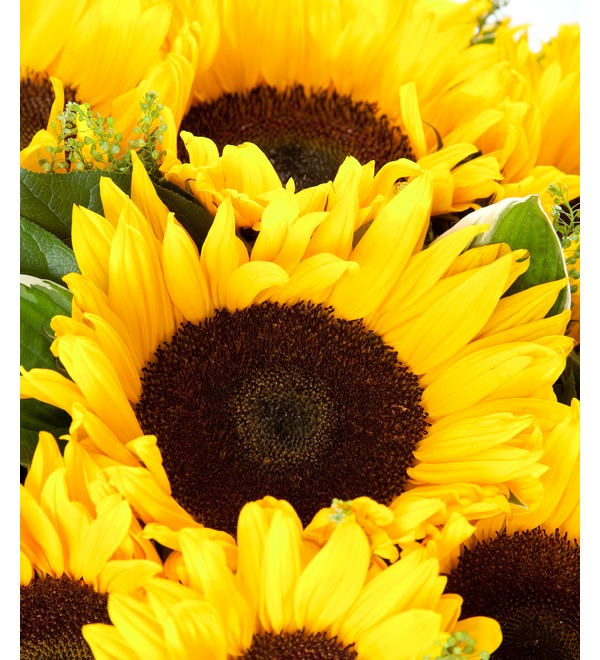 Bouquet Sunflowers – photo #4