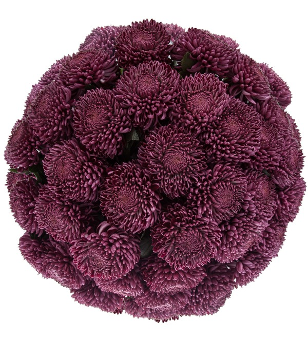 Букет-соло хризантем Bigoudi Purple (9,15,21,35 или 51) – фото № 3