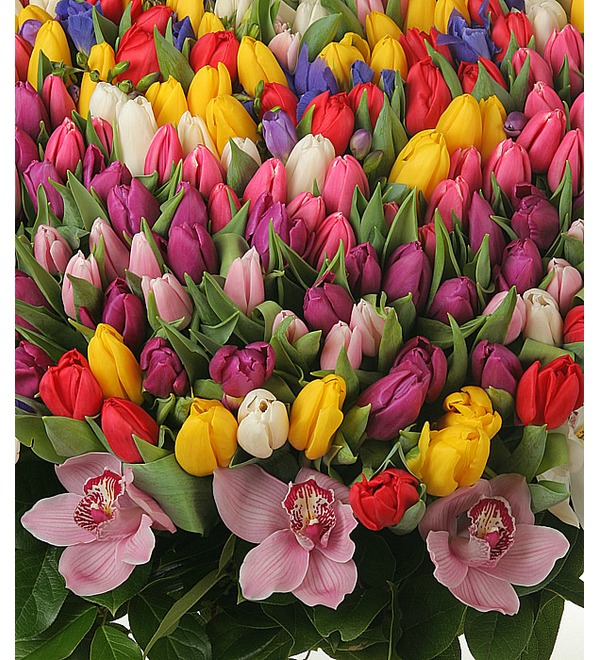 Composition of 301 tulips Happy Spring – photo #2