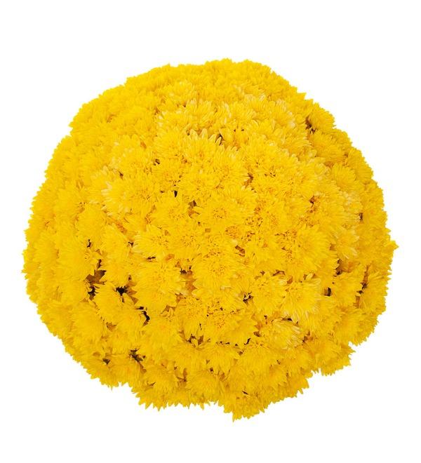 Букет-соло жёлтых хризантем (15,25,51,75 или 101) – фото № 3