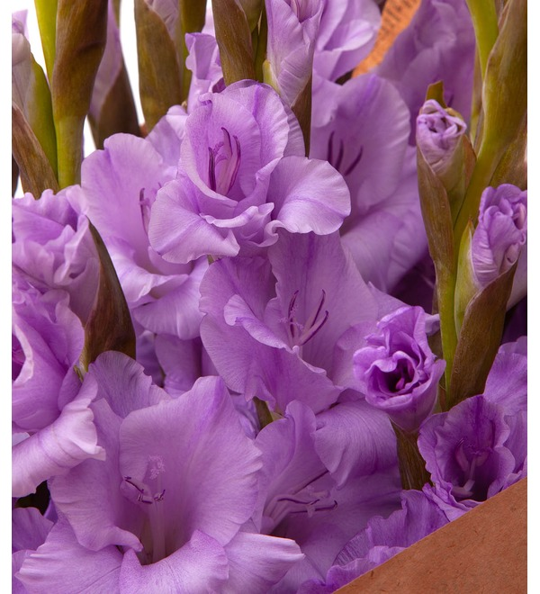 Bouquet-solo of purple gladioli (5,7,9,15,25 or 35) – photo #3
