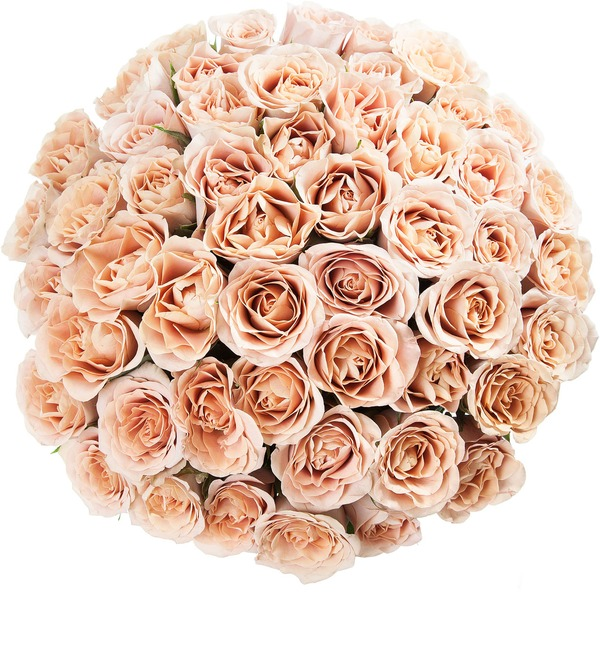 Bouquet of roses Cappuccino (25, 51 или 101) – photo #4
