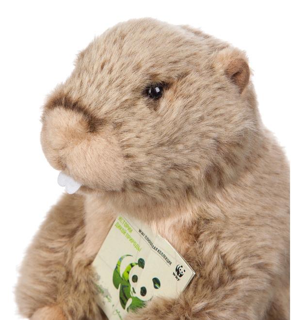 Soft toy Groundhog WWF (23 cm) – photo #3