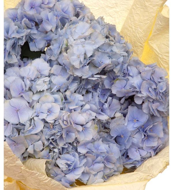 Букет-соло голубых гортензий (5,7,9,15,21 или 25) – фото № 3