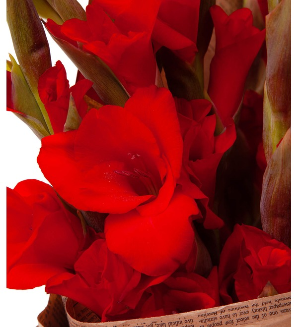 Bouquet-solo of red gladioli (5,7,9,15,25 or 35) – photo #3