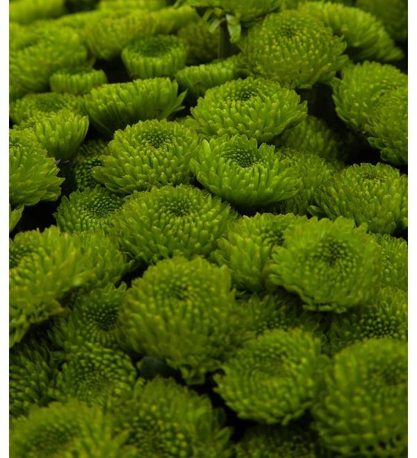 Букет-соло зелёных хризантем (15,25,35,51,75 или 101) – фото № 2