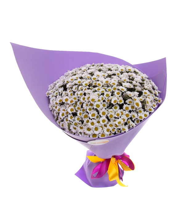 Букет-соло белых хризантем Сантини (15,25,35,51,75 или 101) – фото № 2