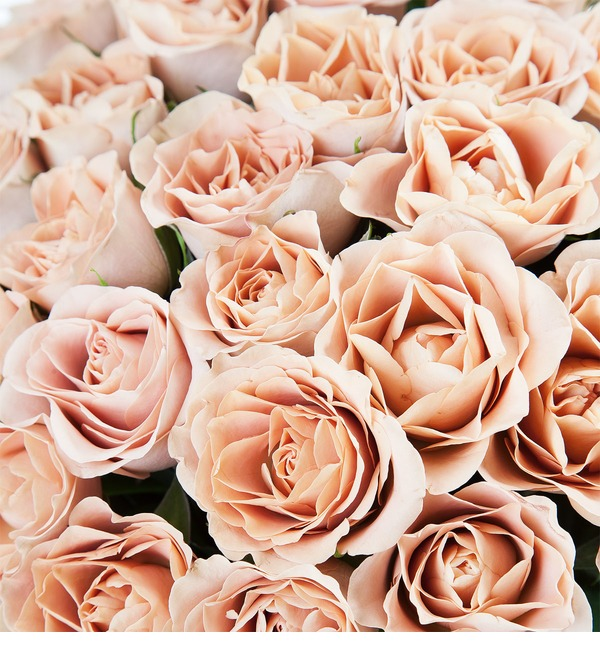 Bouquet of roses Cappuccino (25, 51 или 101) – photo #3