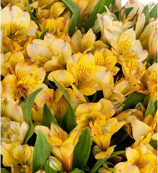 Bouquet Gold (25, 51 or 101 alstroemeria) – photo #3
