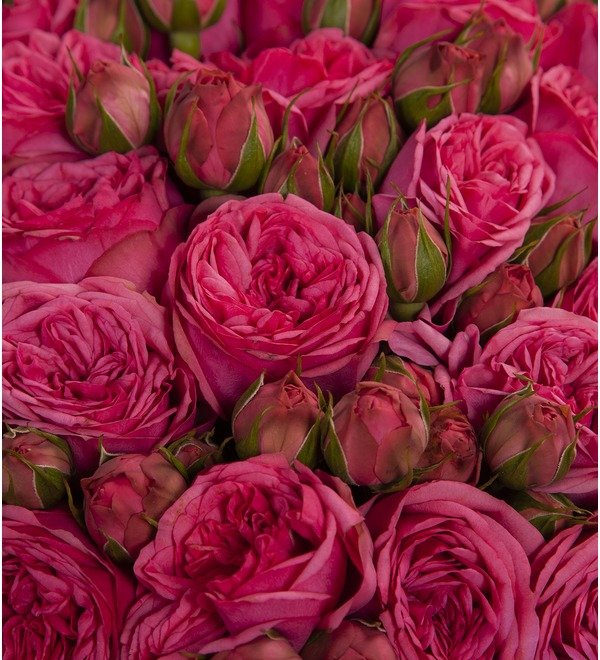 Букет-соло роз Pink Piano (15,25,35,51,75 или 101) – фото № 2