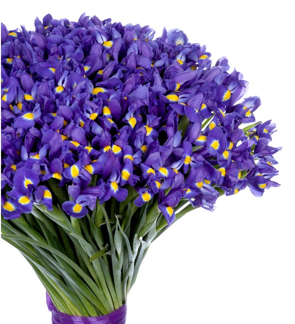 Bouquet-solo Blue irises (51,75,101 or 151) – photo #3